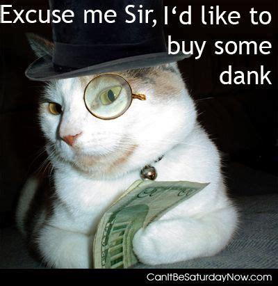 Dank Cat Memes - canitbesaturdaynow com on reddit com