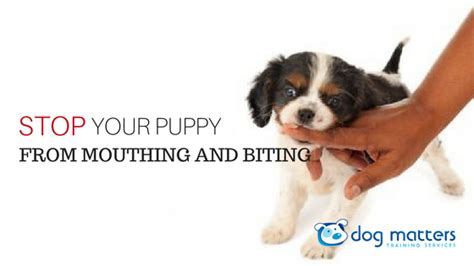 stopping a puppy from biting how to stop your puppy from mouthing and biting
