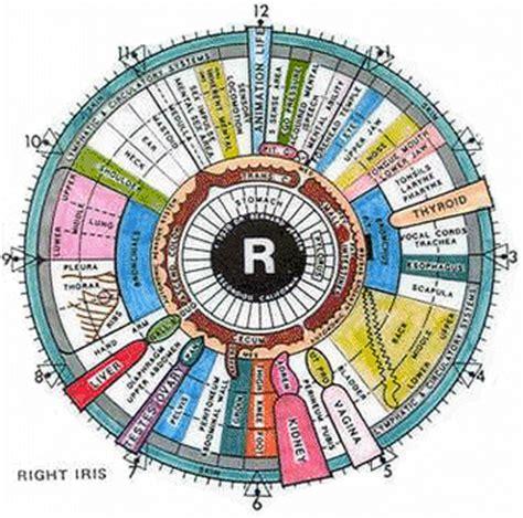 printable iridology eye chart the eyes a window to our body s health