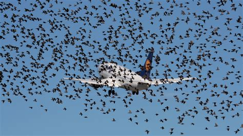 the birds and deer behind thousands of airplane