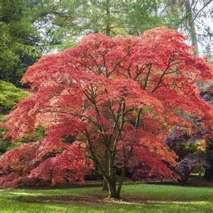 arbre de jardin liste ooreka