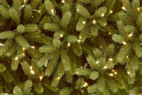 christmas trees for sale south jersey national tree co jersey fraser fir 9 green artificial tree with 1500 clear lights