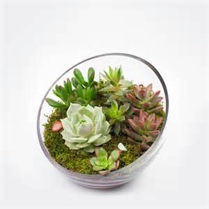 succulent kits the egg diy succulent terrarium kit juicykits com