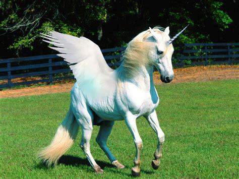 imagenes de unicornios berdaderos im 225 genes de unicornios reales imagenes de unicornios