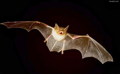 imagenes animales nocturnos animales nocturnos