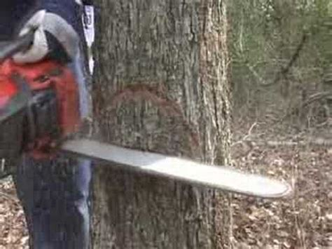 how to cut a tree cut a tree safely