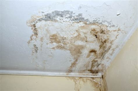 White Mold On Ceiling by Signs That You A Water Leak In Seattle Pipe