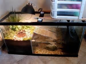 schildkröten beleuchtung 000 ideen zu schildkr ten terrarium auf