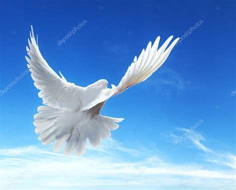imagenes de palomas blancas grandes pomba no ar com as asas abertas na frente do c 233 u azul