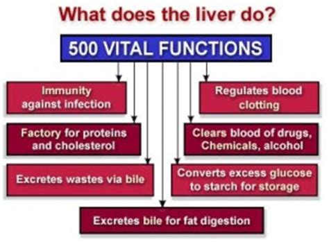 What Does An Organ Detox Do To You by Detoxing Your And How It Can Hurt Your Health