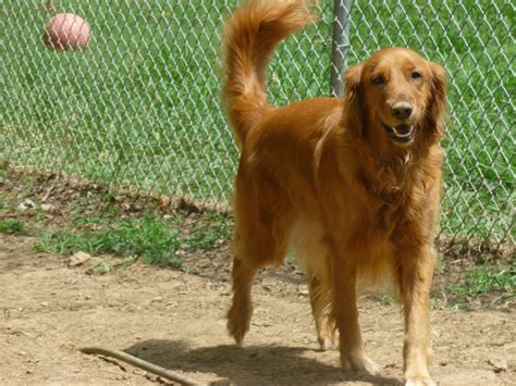 large dogs big paws kennel breeds picture