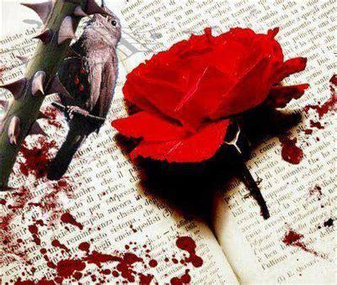 imagenes de rosas negras con sangre rosas con sangre imagenes