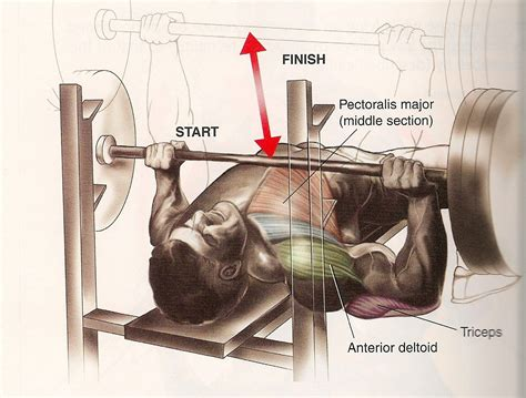 what does a bench press work chest fredkochtraining