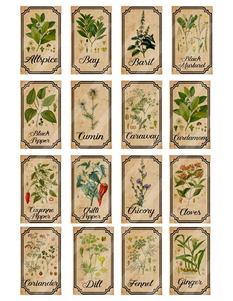 Vintage Herb Labels herb and spice apothecary labels digital printable vintage