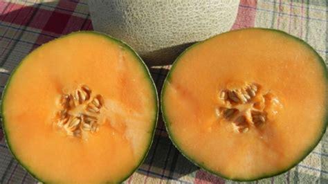Cantaloupe Shelf by New Cantaloupe Pumpkin And Squash Seeds Available