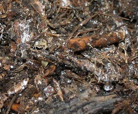 Pilze Im Garten Oktober by Wo Kommen Die Vielen Pilze Im Garten