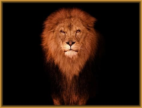 imagenes leones para niños imagenes de leones para imprimir archivos imagenes de leones