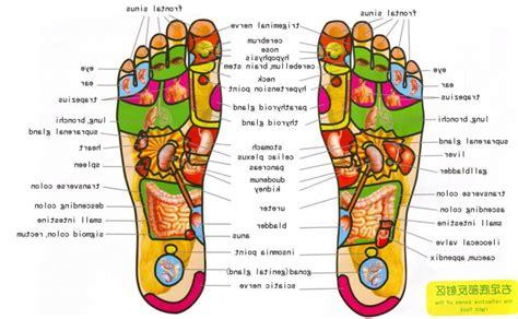diagram of a foot foot anatomy applecool info