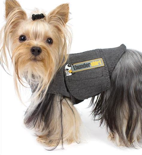 yorkie pu thundershirt anxiety treatment for dogs gw