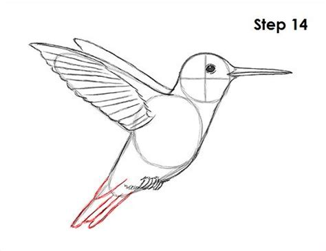 how to draw a hummingbird colibr 237 es pinterest how to
