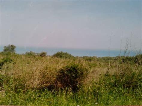 vendita mare grande uliveto terreno agricolo edificabile vista mare