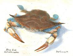 sty squids room crabby crabberson on blue crabs crabs and maryland