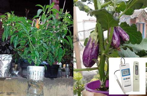 cara menanam sayur dan buah buahan hidroponik sederhana di budidaya sayuran dengan sistem hidroponik