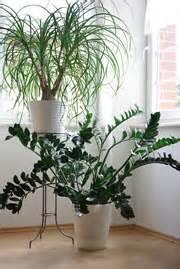 zimmerpflanzen beleuchtung beleuchtung zimmerpflanzen glas pendelleuchte modern