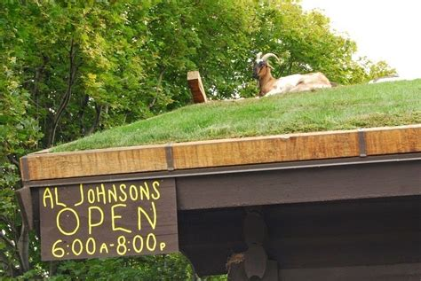 Goats On Roof Door County by A Restaurant With Goats On The Roof Amusing Planet