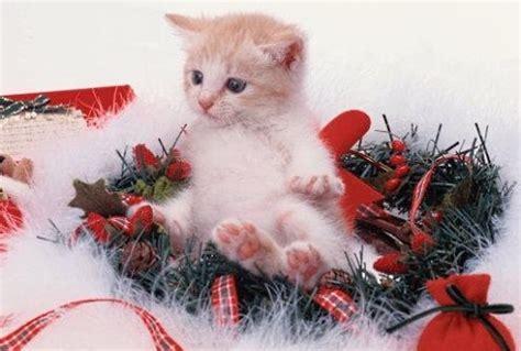 banchetti di natale banchetti natalizi 2013 gattile di carpi a p a c