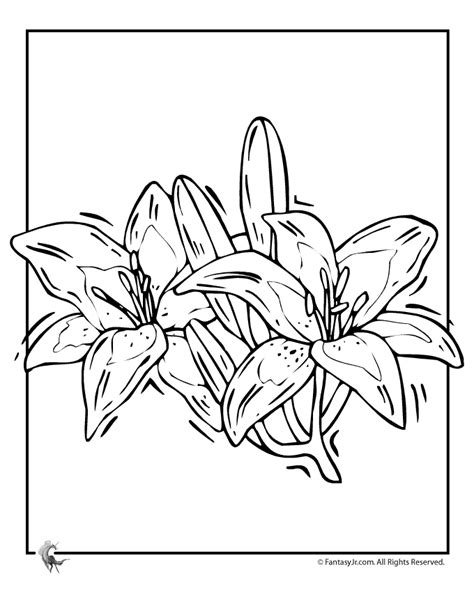 coloring pictures of lily flowers lily flower outline coloring home