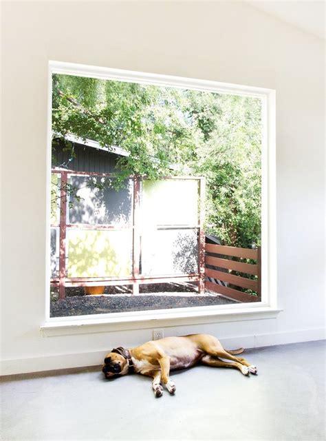 dog house windows big dog big windows dream house