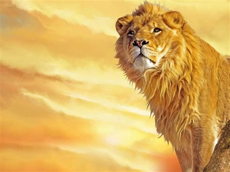 imagenes de leones feroces coleccion imagenes de leones taringa
