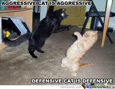 Cat Fight Meme - cat fight by dice 911 meme center