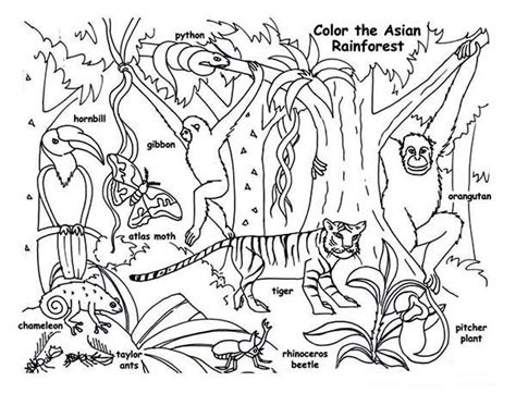 rainforest animals coloring page rainforest animals