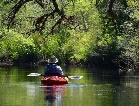 discover atsion in wharton state forest pinelands adventures