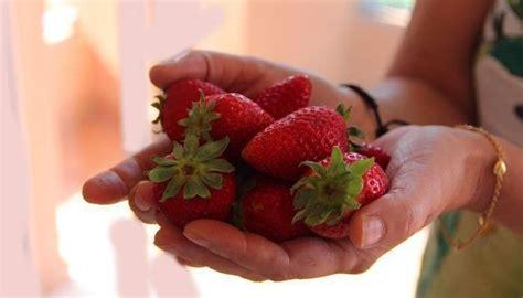 alimentos que reducen el acido urico alimentos que producen 193 cido 218 y aquellos que lo reducen