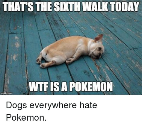puppy everywhere thats the sixth walk today wtfisa dogs everywhere dogs meme on