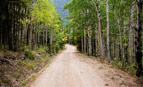 dirt road surrounded green grasses  trees  daytime