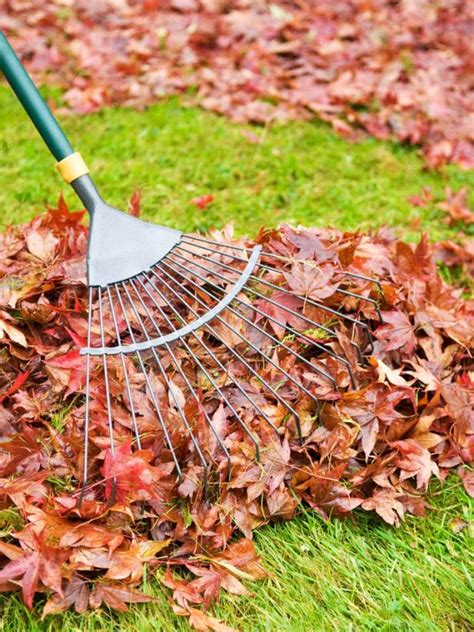 Landscape Rake Leaves How To Prepare Lawn For Winter Hgtv