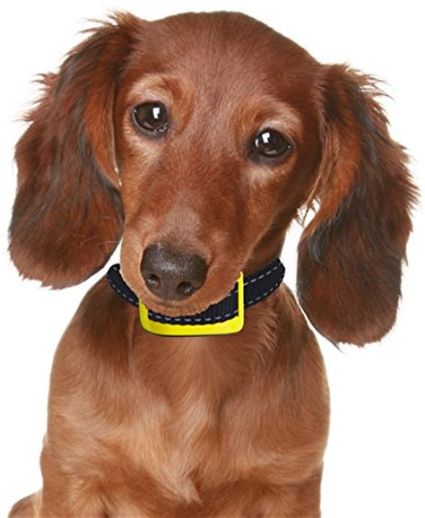 best bark collar for small dogs our k9 yellow bark collar uses sound and effective vibration for correction best