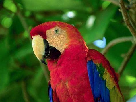 temperatura colore lade caracter 237 sticas el reino animal