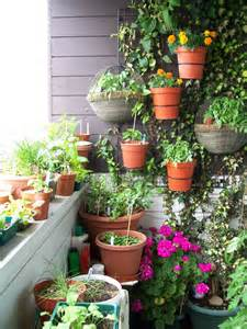 balcony vegetable garden growing a vegetable garden on a balcony apps directories
