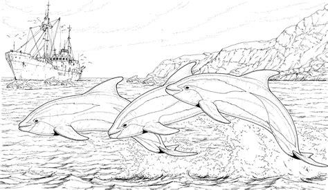 dolphin coloring page pdf dolphin coloring pages