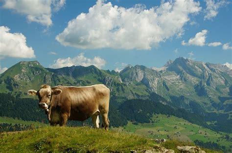 view saentis mountain  photo  pixabay