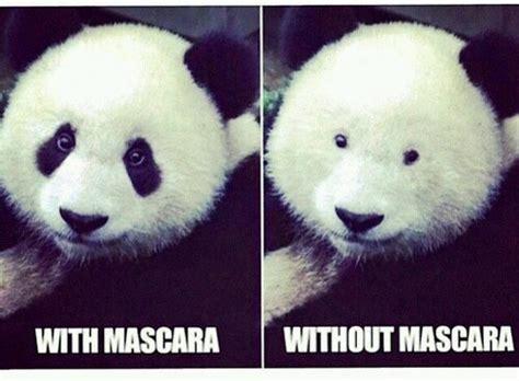 Panda Meme Mascara - no mascara panda pictures inspirational pictures