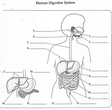 digestive system diagram quiz mr watts website
