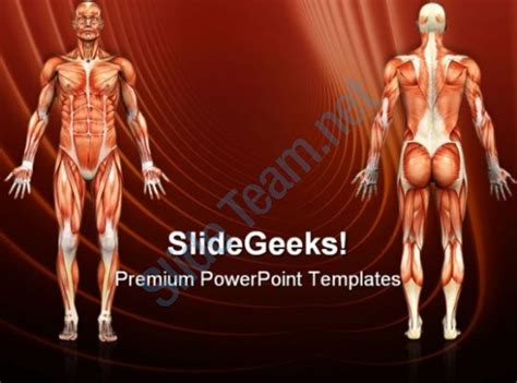 Human Anatomy Male Muscles Science Powerpoint Templates And Powerpoint Backgrounds 0911 Anatomy Ppt Templates Free