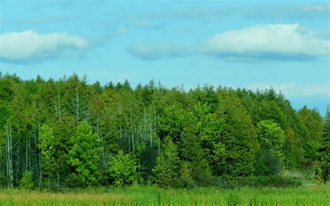green wallpaper canada grass green forest canada wallpapers grass green forest