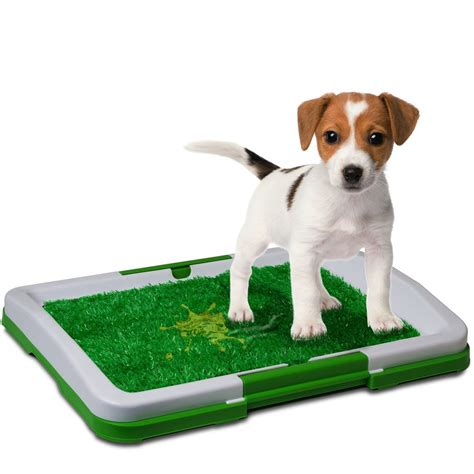 how to potty a puppy in the winter winter canine care accessories for indoor crates and outdoor kennels